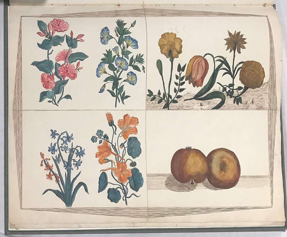Botanical illustrations from Lydia Bishop manuscript, The Abbey Studio